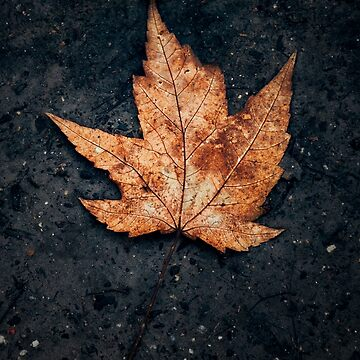 Leaf Fallen Center by textural