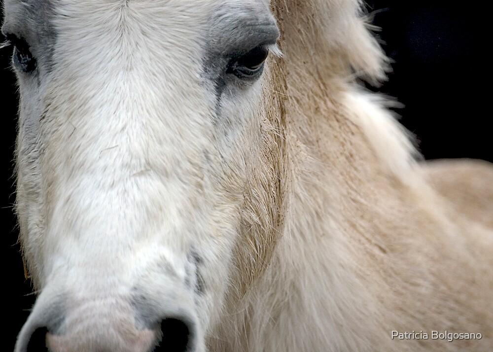Wanna Horse Around ? by Patricia Bolgosano