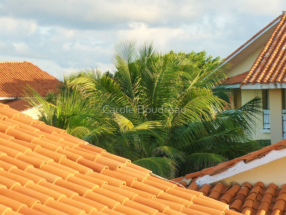 The Terra Cotta Tile Roofs by Carole Boudreau