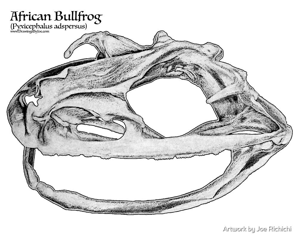 African Bullfrog Skull by Artworkbyjoe