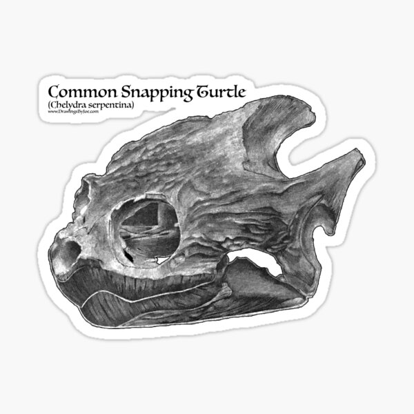 Common Snapping Turtle Skull Sticker