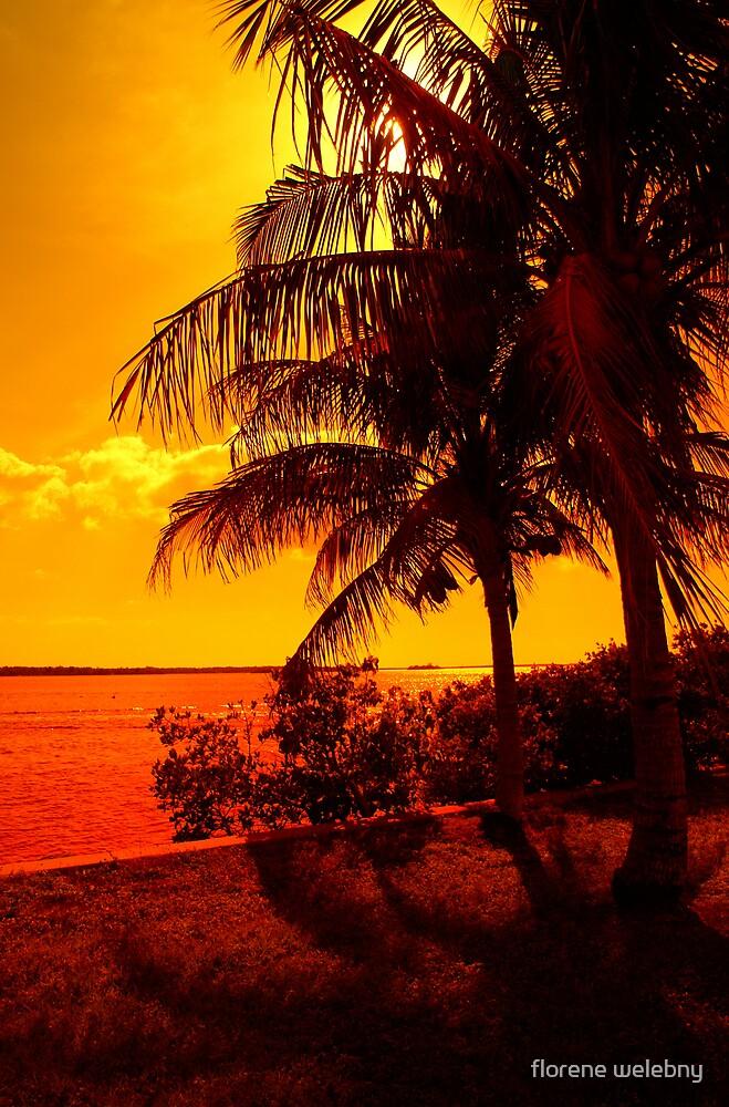 Warmed by the Tropics by florene welebny