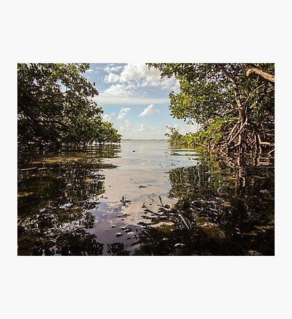 The View to Lemon Bay  Photographic Print