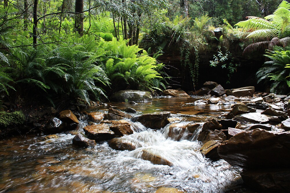 Borradaile Creek Tasmania by tazsnaps