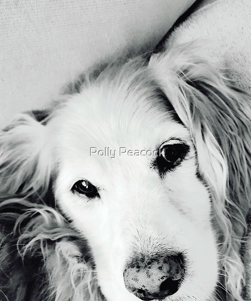 My Pal Stevey by Polly Peacock