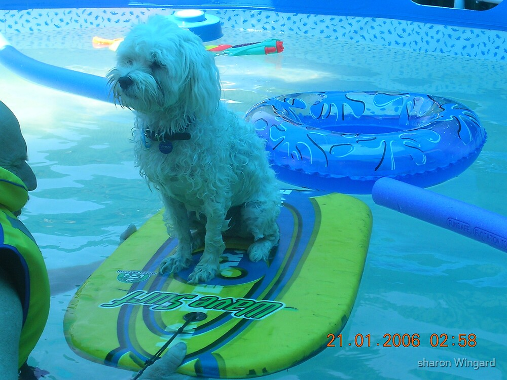 surf doggy by sharon wingard
