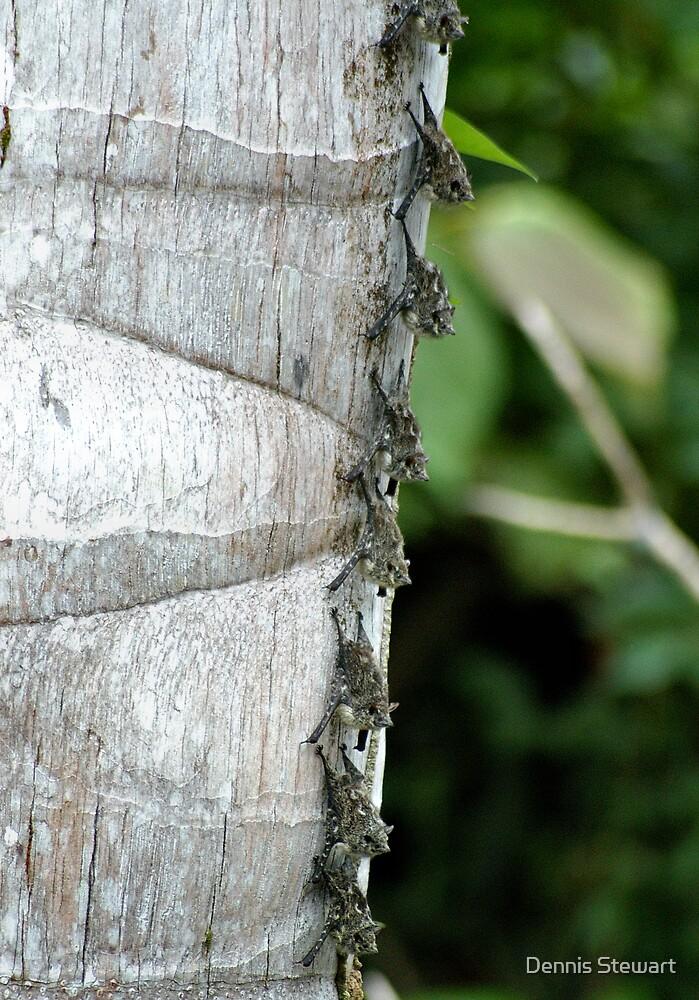 Long-Nosed Bats by Dennis Stewart