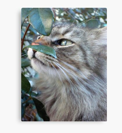 SOFT KITTY Metal Print