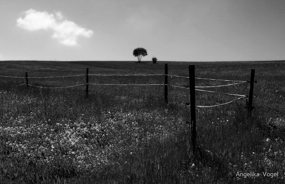 Die Blumenwiese ... Black Forest by Angelika  Vogel