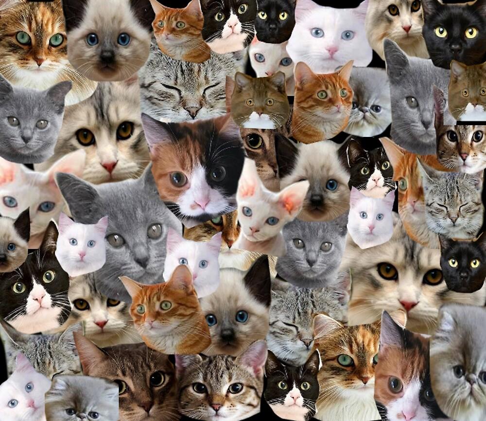 CRAZY CAT LADY  by Dassy86