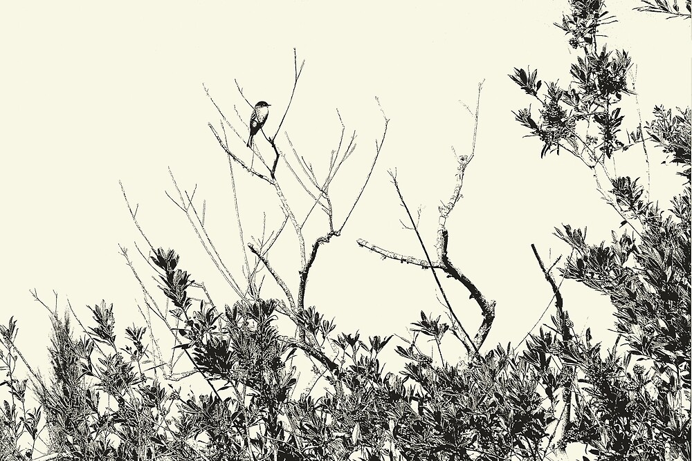 Blue Bird In A Holly Tree - Sketch - Artistic by jtrommer