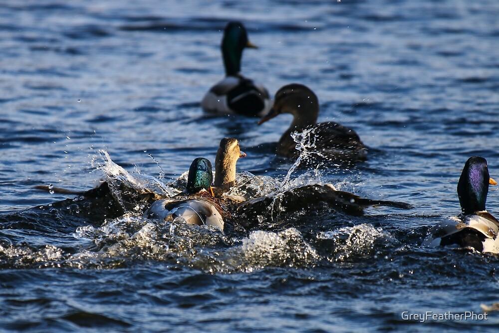 Making a splash by GreyFeatherPhot
