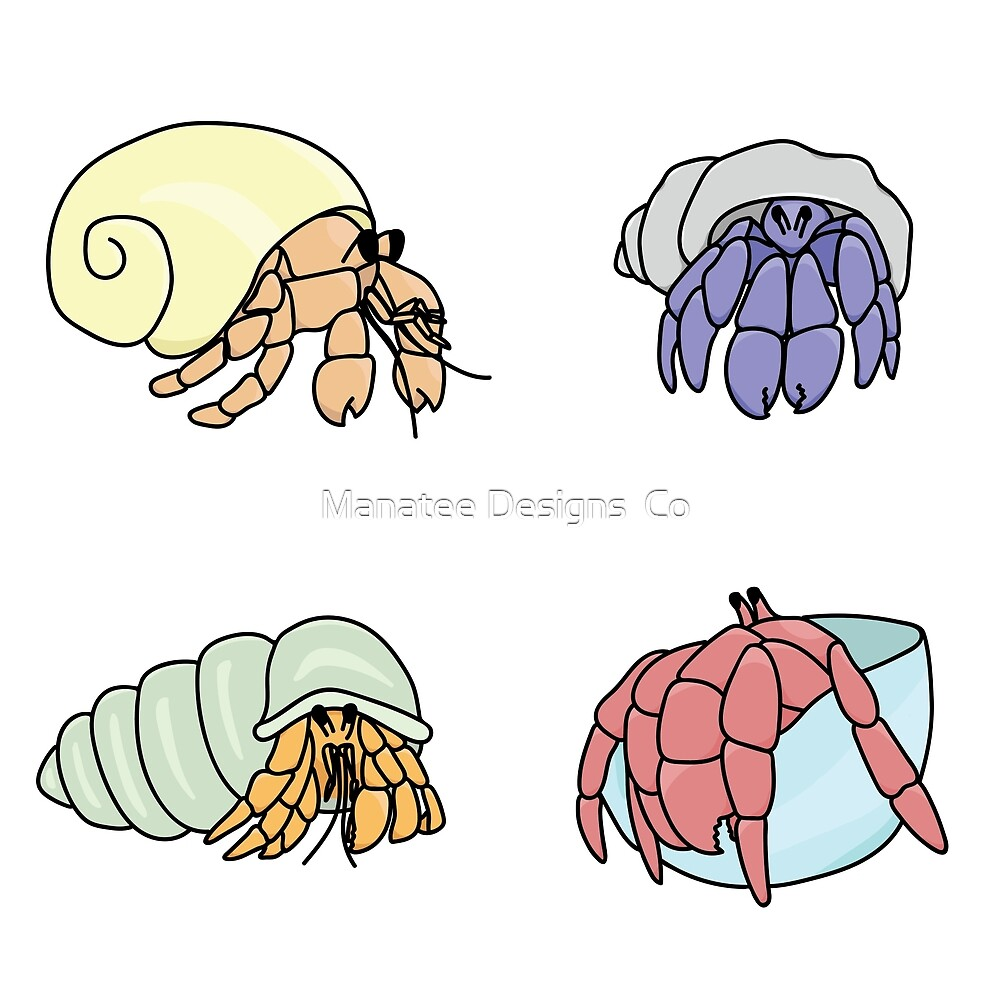 Hermit Crabs by Manatee Designs  Co