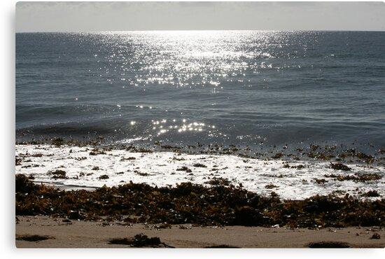 Culburra Beach Morning by judith26