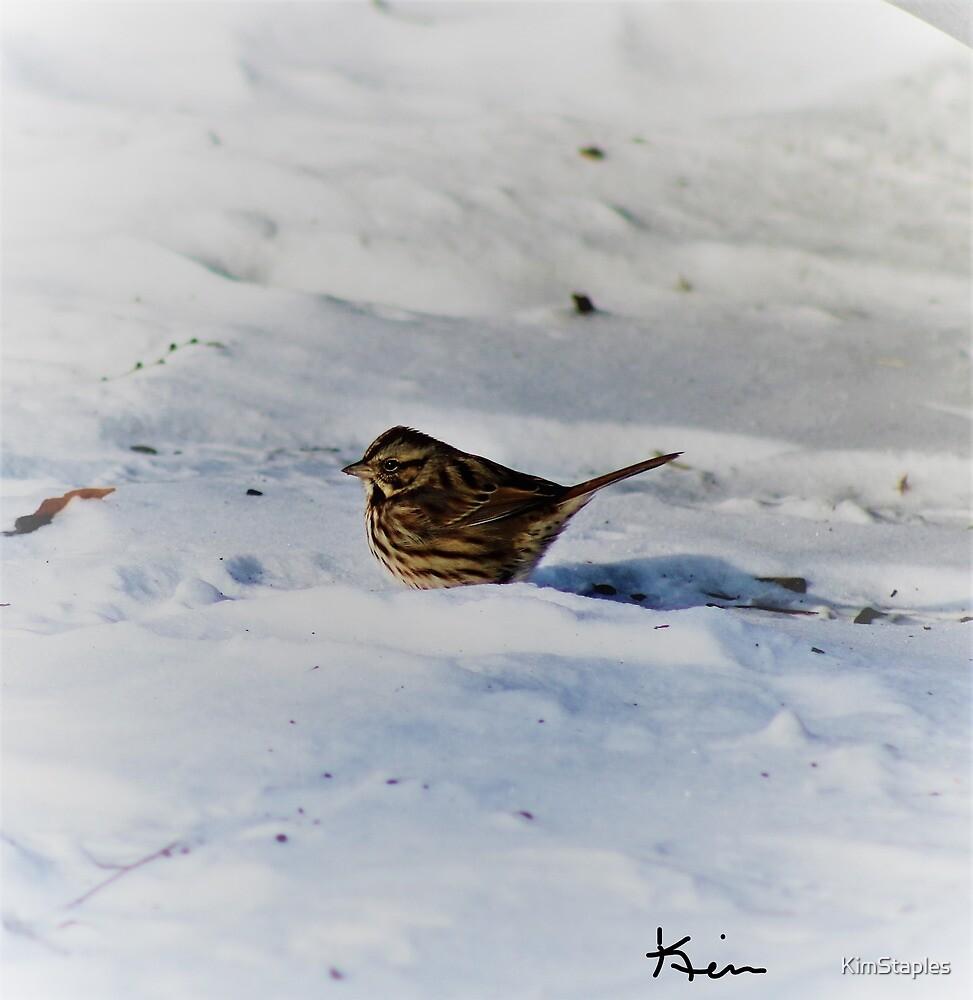 Winter Bird by KimStaples