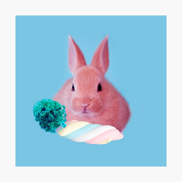 Pink Rabbit with carrot marshmellow by Alice Monber Photographic Print