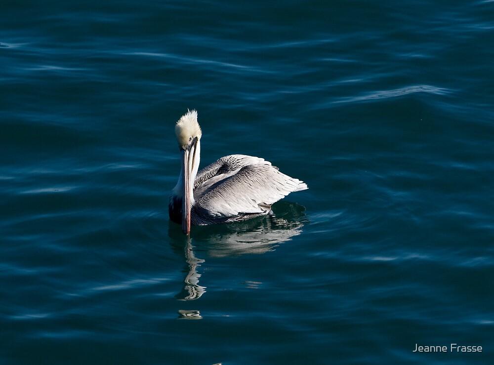 Reflecting Pelican by Jeanne Frasse