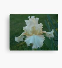 "Bearded Iris - ""Goddess"" Canvas Print"