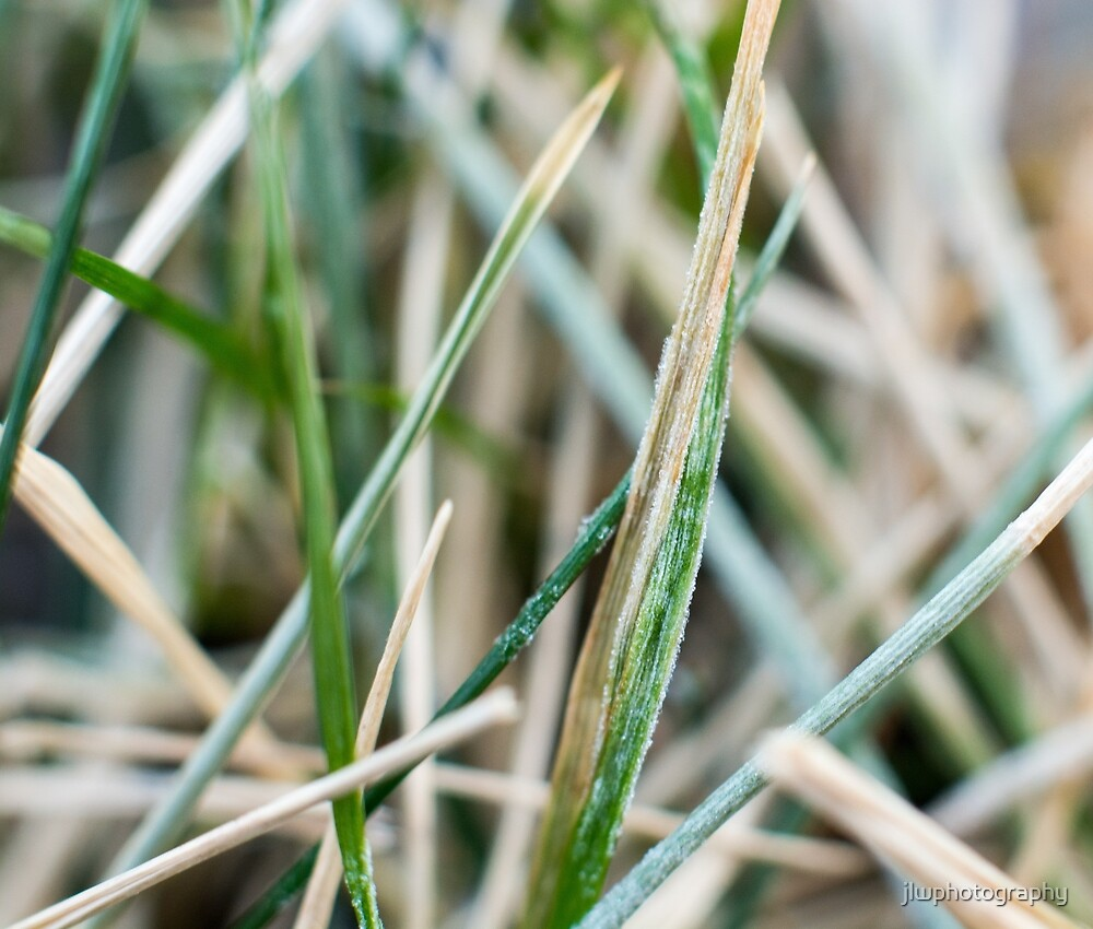 Frozen Grass  by jlwphotography