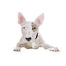 Terrier Bull Dog by Elizabeth Reoch