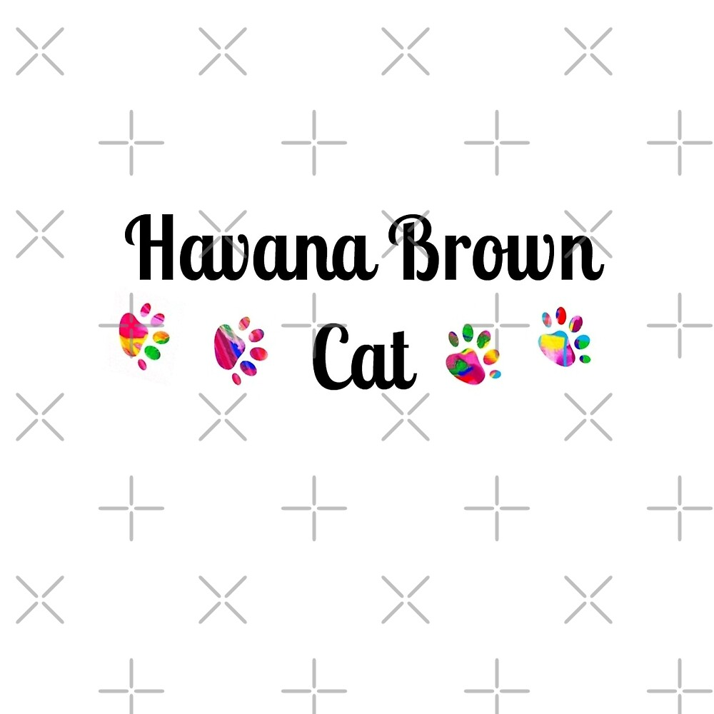 HavanaBrown cat -  star quality by myfavourite8