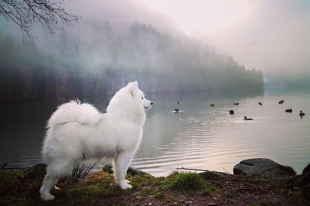 Lake view  by Nanuq