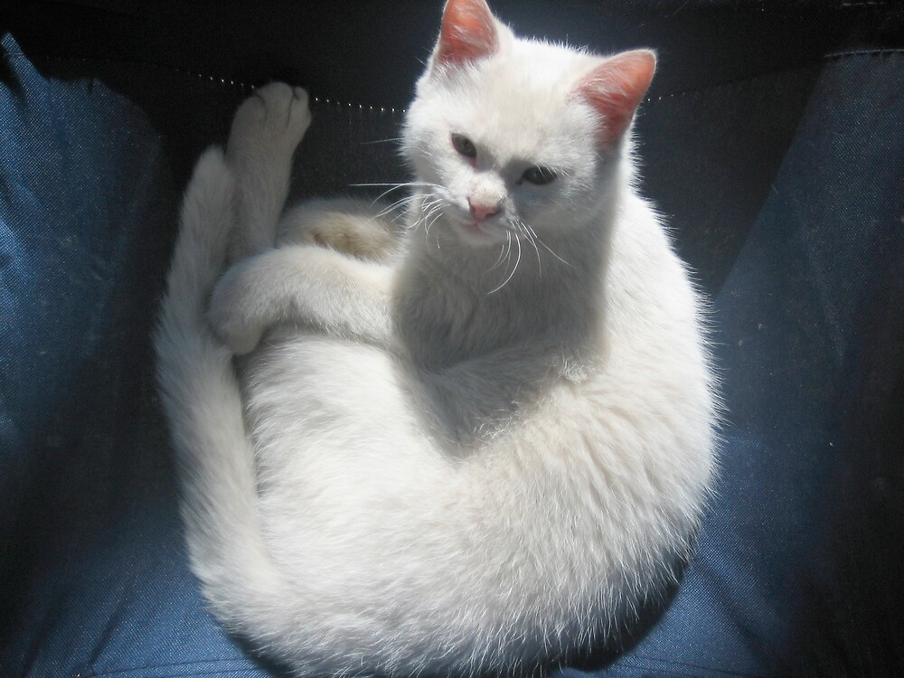 White Cat Resting on Blue Chair  by jojobob