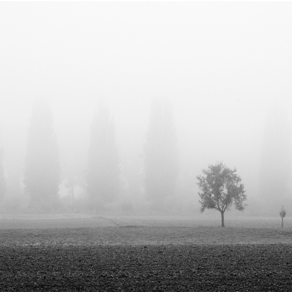 giants in the mist by Sebastian Willius
