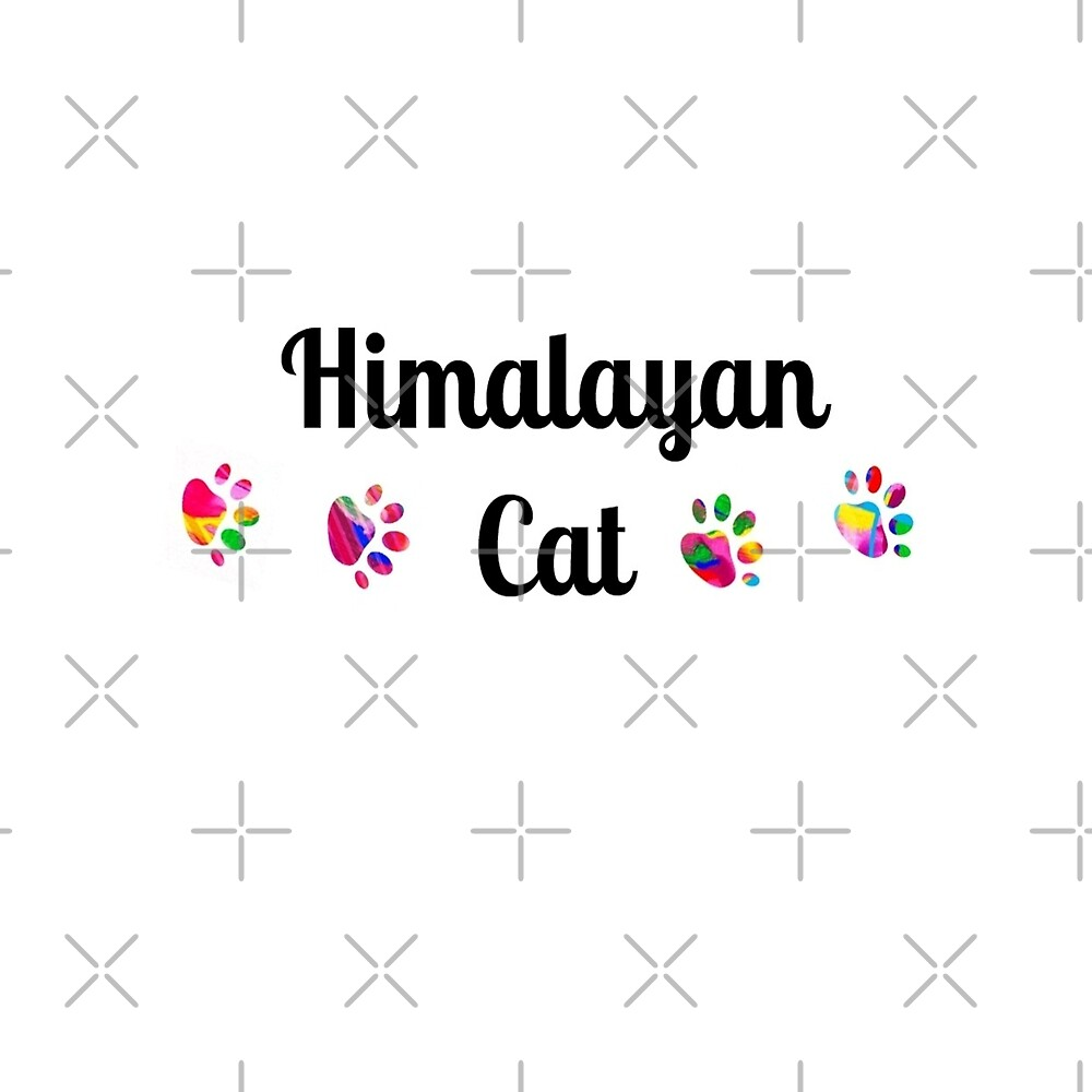 Himalayan Cat -  star quality by myfavourite8