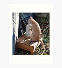 Kitten Playing with Tent Rope Art Print