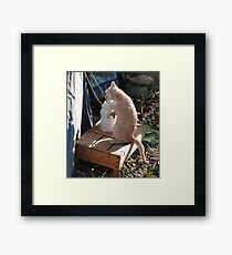 Kitten Playing with Tent Rope Framed Print