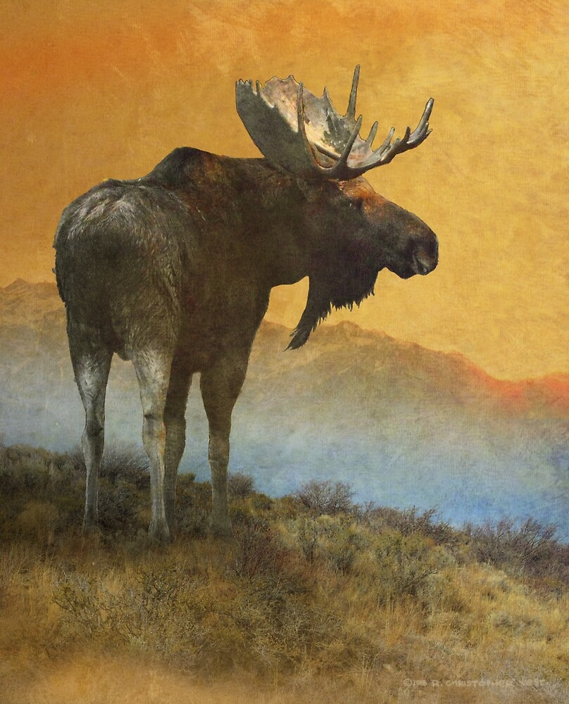 back off-- american moose by R Christopher  Vest