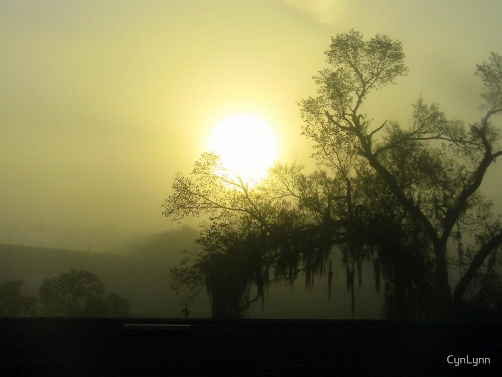 Foggy Florida Sunrise by CynLynn