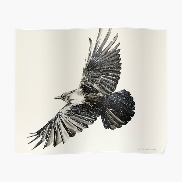 Crow Study Poster