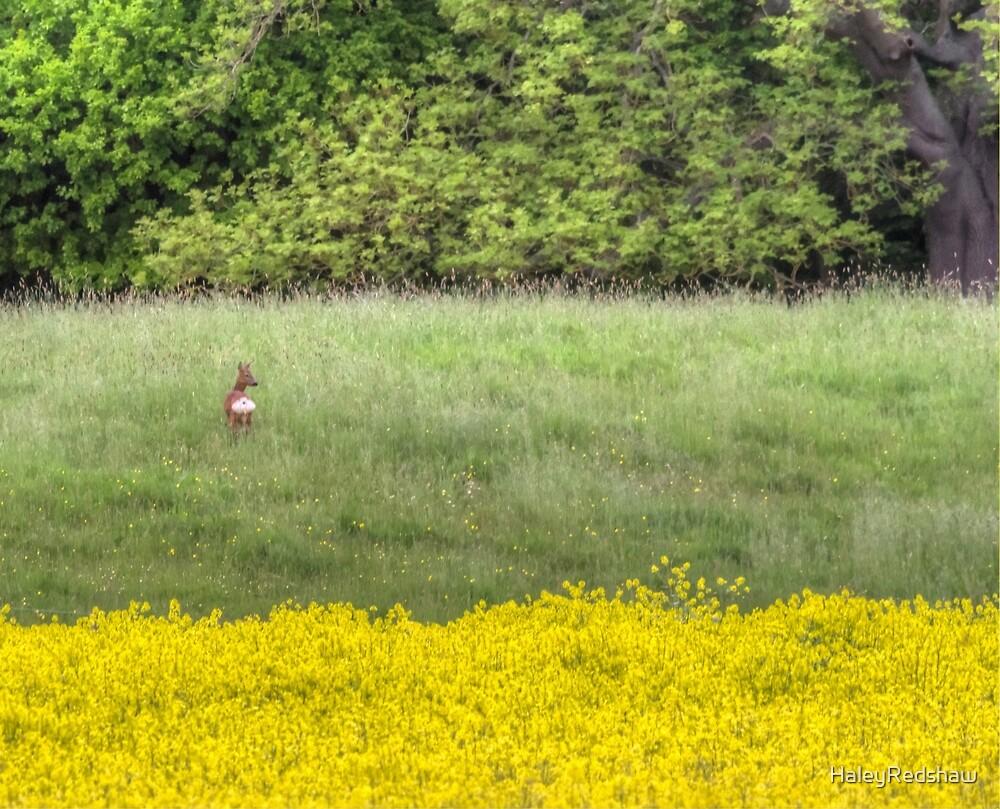 Deer in the summer fields  by HaleyRedshaw