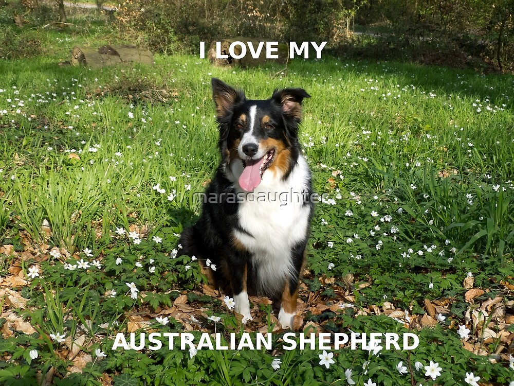 australian shepherd black tri love with picture by marasdaughter