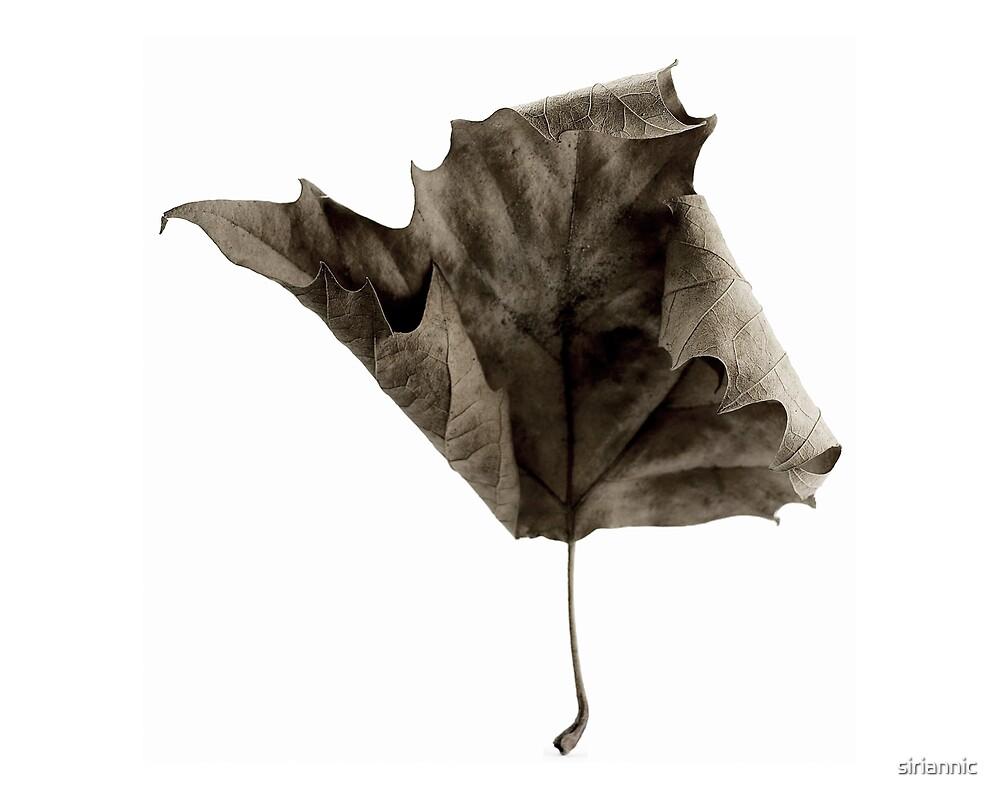 Maple Leaf  2 by siriannic
