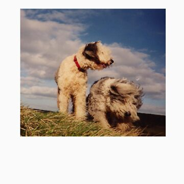 Windswept Sheepdogs by Grooveworks