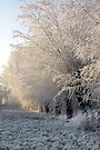 Winter Morning by AnnieSnel