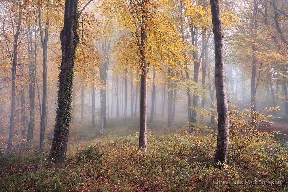 Autumnal Hooke by Chris Frost Photography