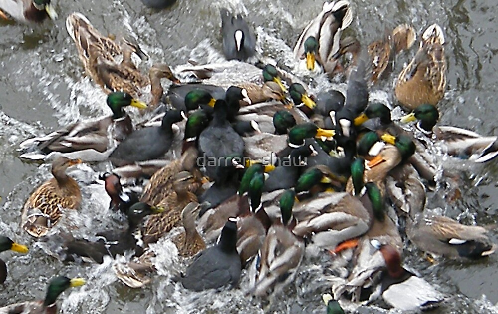 duck orgy by darren  shaw