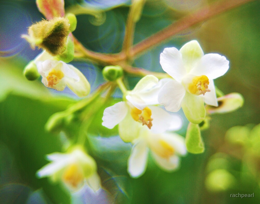 Wild flowers by rachpearl