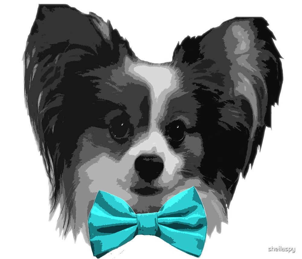 Dapper Papillon with Aqua Bowtie by sheilaspy