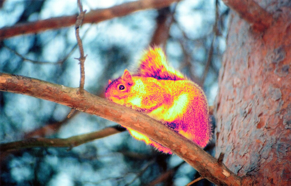 Psychedelic Squirrel by Nathan Walker