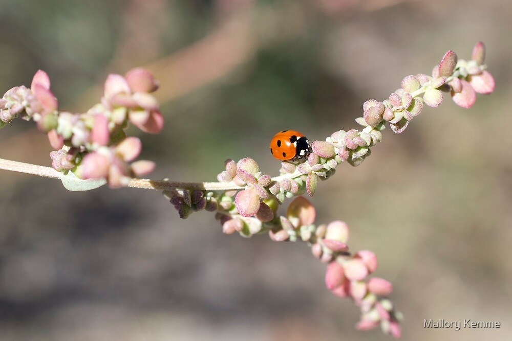 Ladybug in the Sun by Mallory Kemme
