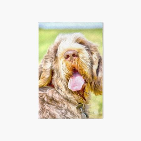 Sunny summer day Spinone Art Board Print