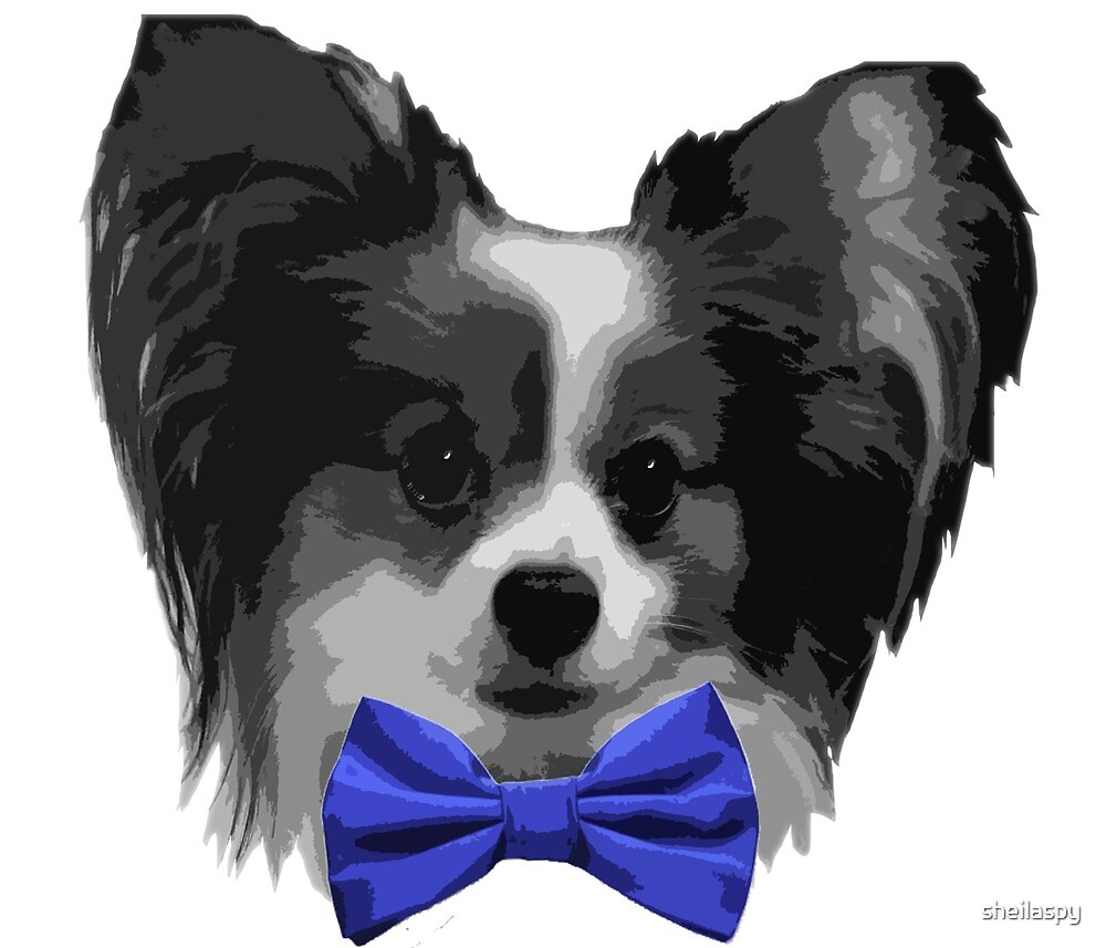 Dapper Papillon with Blue Bowtie by sheilaspy