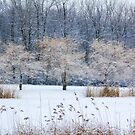 Winter in the park by Tamara Travers