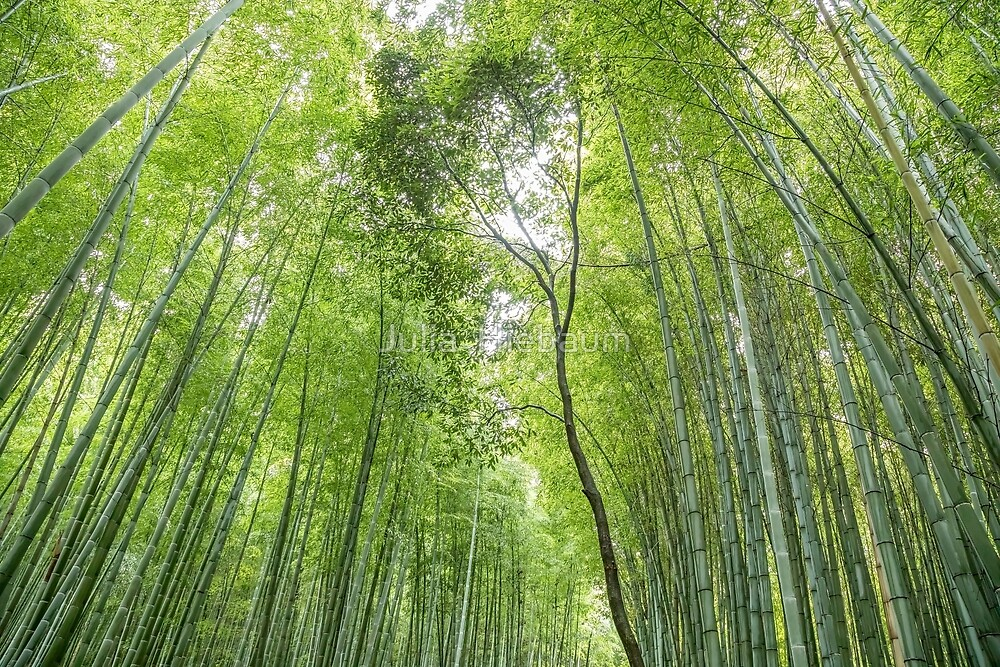 Bamboo forest in Kyoto, Japan by Julia  Hiebaum