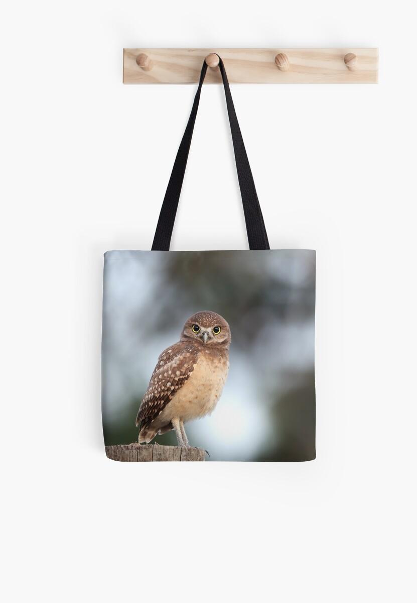 Owlet by mlorenz